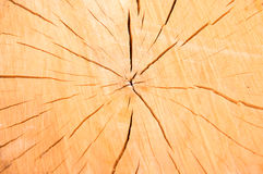 Текстура абстракции пня дерева Стоковое Изображение