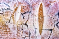 текстура агата каменная Стоковые Изображения