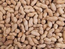 текстура арахисов Стоковые Изображения RF
