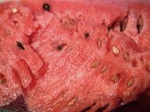 Текстура арбуза стоковая фотография rf