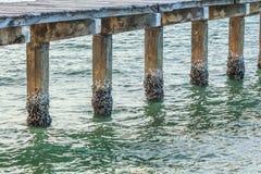 Текстура бетона имеет раковину моря с морем Стоковое Изображение RF
