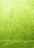 текстура болотоа Стоковая Фотография RF