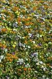 Текстура большое количество различных красочных цветков засаженных в цветке Стоковые Фотографии RF