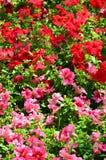 Текстура большое количество различных красочных цветков засаженных в цветке Стоковая Фотография