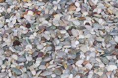 Текстура: большой зашкуренный гравий Небольшие белые камни мела Художественные сбросы от природных объектов стоковое фото
