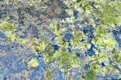 Текстура болота Стоковые Изображения