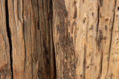 Текстура Брайна деревянная естественная Стоковые Фото