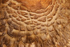 Текстура верхней части гриба крупного плана Стоковая Фотография RF