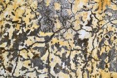 Текстура 5245 - гипсолит Стоковое фото RF