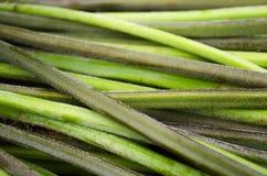 Текстура горизонтальных зеленых черенок папоротник-орляка Стоковые Изображения