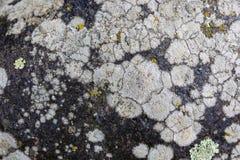 Текстура грибка на каменной поверхности Стоковая Фотография