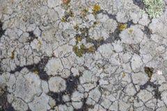 Текстура грибка на каменной поверхности Стоковое фото RF