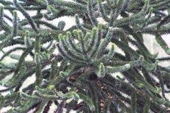 Текстура дерева в зеленом цвете Стоковые Изображения
