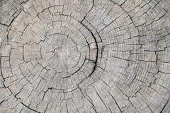 Текстура дерева грубой поверхности валить выдержала с ежегодными кольцами Стоковые Фото