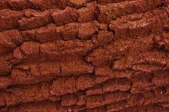 Текстура дерева от mahogany стоковое изображение