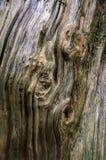 Текстура деревянного хобота Стоковые Фотографии RF