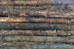 Текстура деревянных журналов Стена сарая Стоковая Фотография