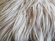 Текстура - длинные волосы стоковое фото