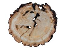 Текстура древесины ольшаника Стоковая Фотография