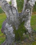 Текстура древесины перерастанной с мхом Стоковое фото RF