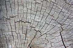 Текстура древесины cuted серым цветом стоковое фото