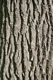 текстура дуба s расшивы вертикально Стоковое фото RF
