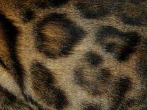 Текстура леопарда дикого животного меха Стоковая Фотография RF