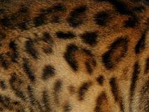 Текстура леопарда дикого животного меха Стоковые Фото