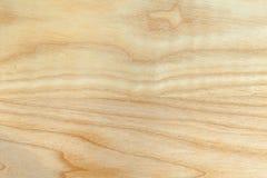 Текстура дерева бука Стоковая Фотография