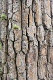 Текстура дерева выглядеть как утес Стоковая Фотография