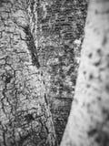 Текстура дерева в черно-белом Стоковая Фотография