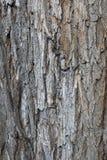 Текстура дерева коры дерева старая Стоковые Фотографии RF