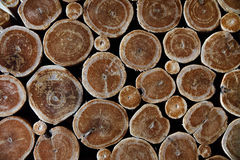 Текстура дерева поперечного сечения предпосылки Деревянная предпосылка Текстура стены деревянная Стоковое Изображение RF