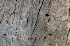 Текстура дерева расшивы Стоковая Фотография