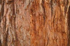 Текстура дерева секвойи Стоковые Фотографии RF
