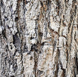 Текстура дерева Стоковые Фото