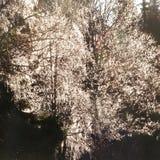 Текстура дерева back-light Стоковые Изображения