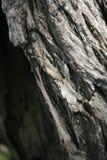 Текстура деревянной предпосылки Стоковое Изображение