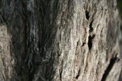 Текстура деревянной предпосылки Стоковое фото RF
