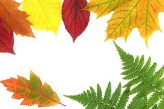 Текстура леса осени Стоковые Фотографии RF