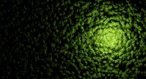 Текстура леса Стоковое Изображение