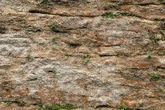 Текстура естественного камня в коричневых и желтых цветах с заводами Стоковое Изображение