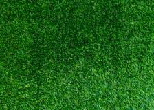 текстура естественной предпосылки зеленой травы свежий зеленый цвет травы Стоковая Фотография