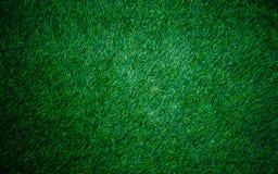 текстура естественной предпосылки зеленой травы свежий зеленый цвет травы Стоковые Фотографии RF