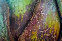 Текстура естественной предпосылки картины кривой дерева Стоковая Фотография RF