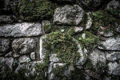 Текстура естественных камня и мха Стоковое Фото