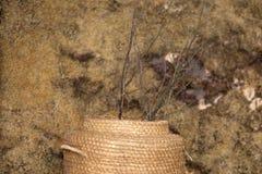 Текстура желтого цвета зеленого цвета мха предпосылки с вазой соломы и ветвями дерева Стоковые Изображения