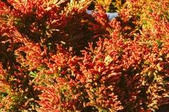Текстура желтой травы Стоковые Изображения