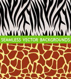 Текстура жирафа зебры иллюстрация вектора