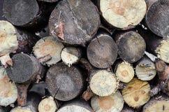 Текстура журналов дерева Стоковое Фото